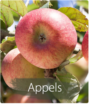 Appelboom kopen en planten