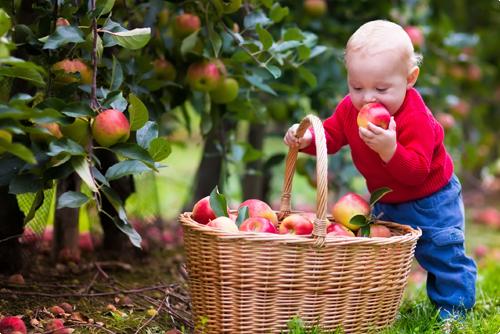 Fruitbomen kopen in Oost Vlaanderen | Tips en plantadvies