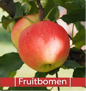 Catalogus fruitbomen | Kopen