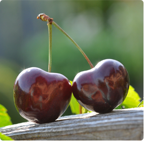Kers kopen Prunus avium