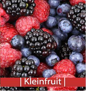 Catalogus kleinfruit | Kopen