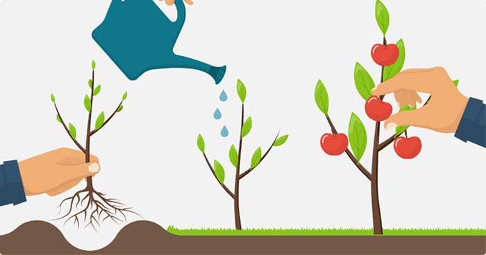 Fruitbomen planten van A tot Z