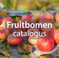 Fruitbomen kopen of bestellen? Appelbomen, perenbomen, perzikbomen en veel meer!