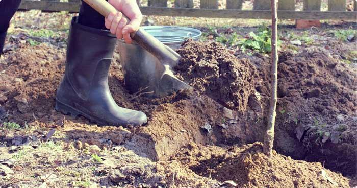 Fruitbomen aanplanten met bodemverbeteraar
