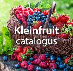 Kleinfruit planten kopen: frambozen, blauwe bessen, aalbessen