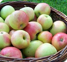 Appelboom James grieve kopen malus